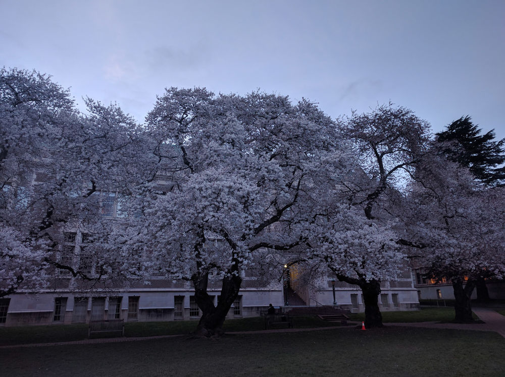 UW is a beautiful campus