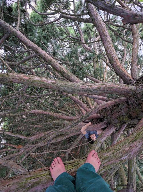 Tree climbing around UW